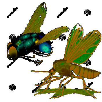zanzare-e-mosche